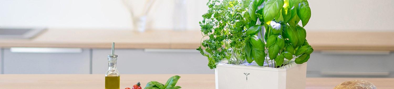 Indoor Plants & Planters
