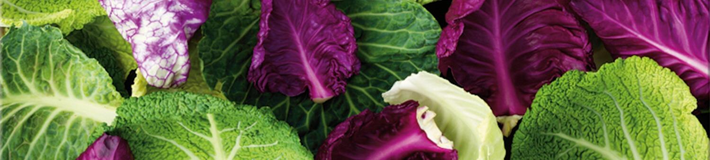 Salad Spinner / Accessories