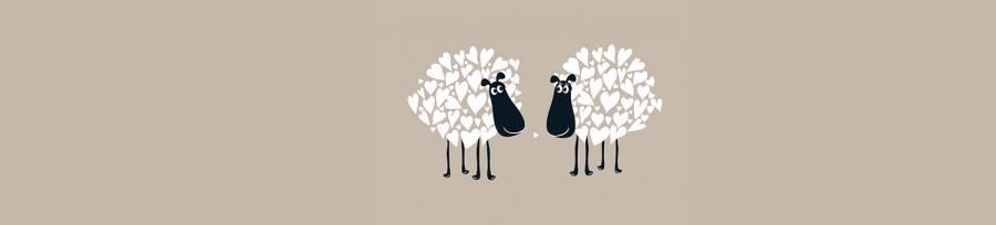 Melamaster Sheep