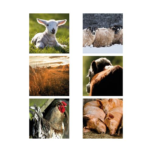 Country Matters Farm & Farmyard Coasters Set Of 6