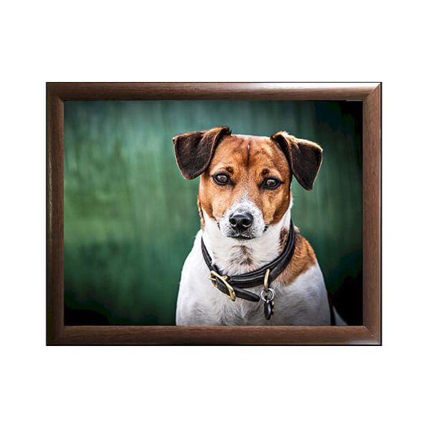 Country Matters Jack Russell Lap Tray