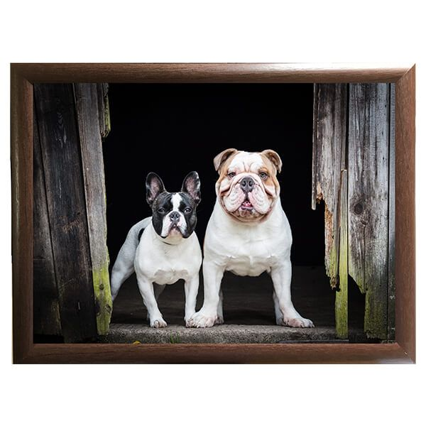 Country Matters French and English Bulldog Lap Tray