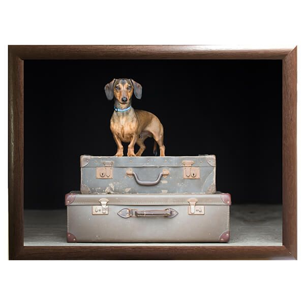 Country Matters Dachshund Travels Lap Tray