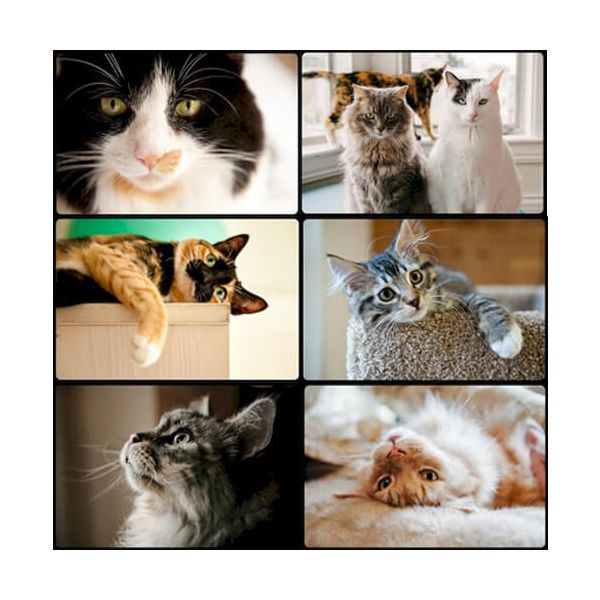 Country Matters Cats Placemats Set Of 6