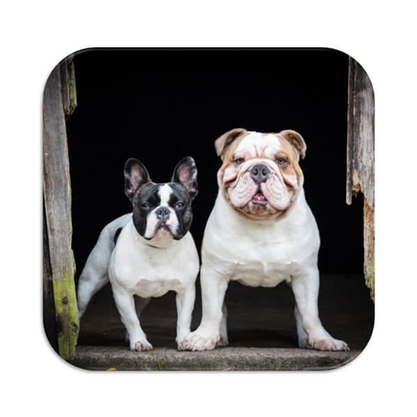 Country Matters French and English Bulldog Coaster