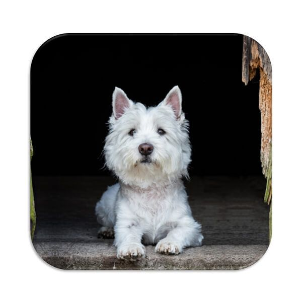 Country Matters Westie Coaster