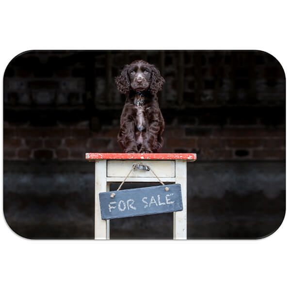 Country Matters Bailey for Sale Placemat