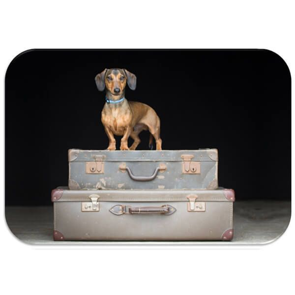 Country Matters Dachshund Travels Placemat