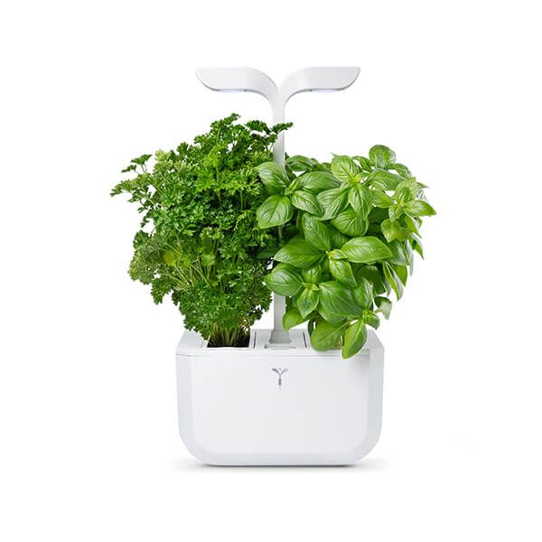 Veritable Arctic White Classic Exky 2-Slot Indoor Garden