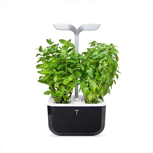 Veritable Soft Black Smart Exky 2-Slot Indoor Garden