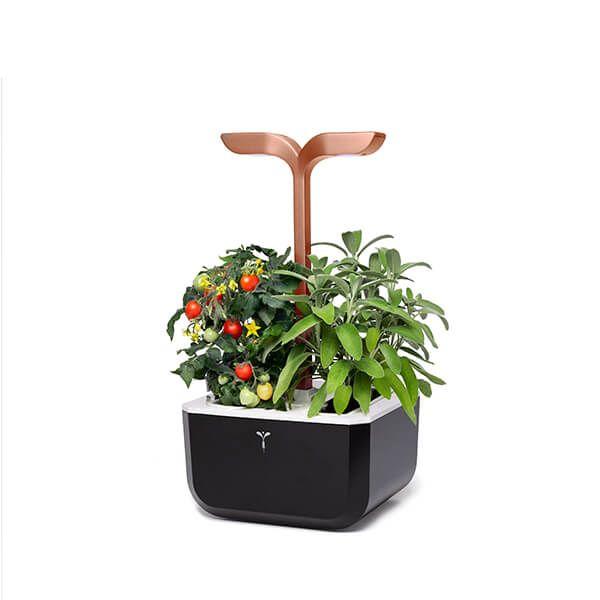 Veritable Black Copper Smart Exky 2-Slot Indoor Garden