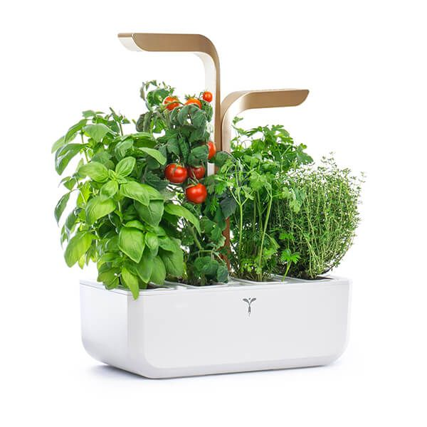 Veritable Moonlight Gold Connect 4-Slot Indoor Garden