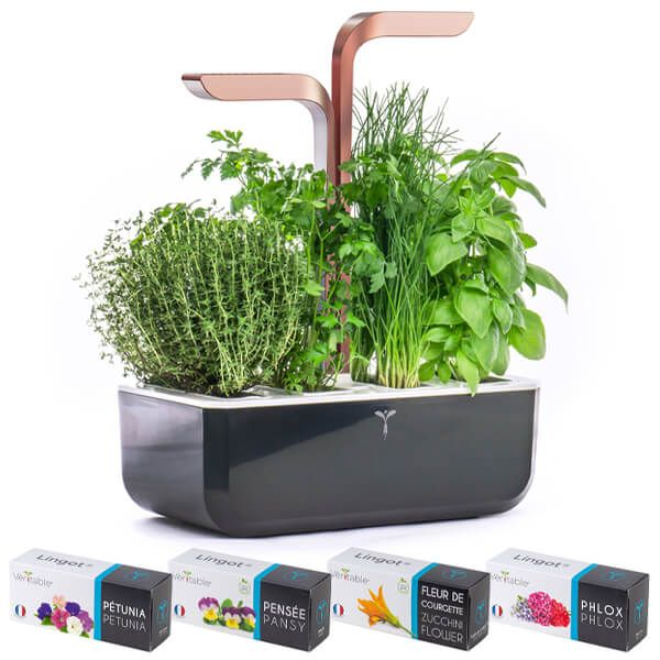 Veritable Black Copper Smart 4-Slot Indoor Garden with FREE Gifts