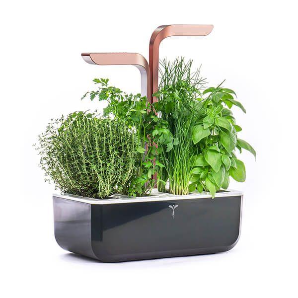 Veritable Black Copper Smart 4-Slot Indoor Garden