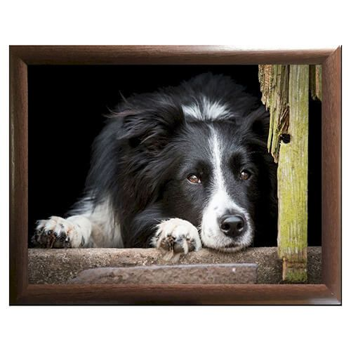 Country Matters Chilled Out Collie Lap Tray