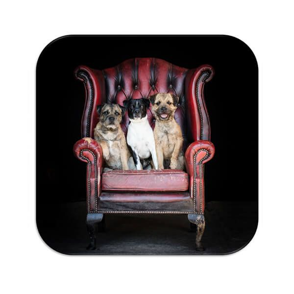 Country Matters The Terriers Coaster
