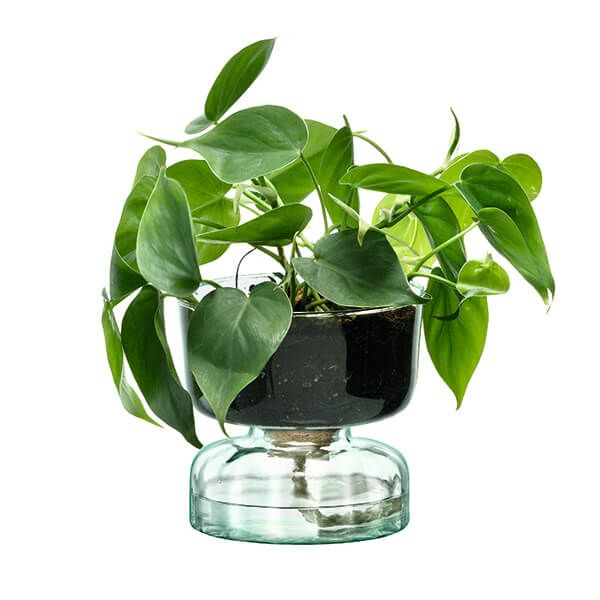 LSA Canopy 13cm Self Watering Planter