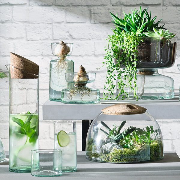 LSA Canopy Glassware