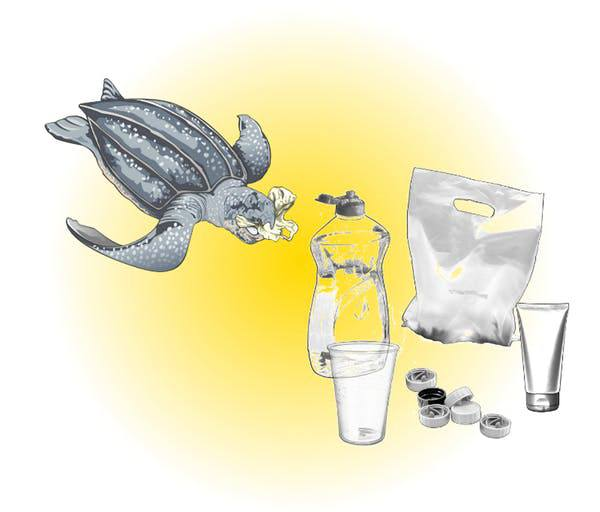 Turtle and plastic waste